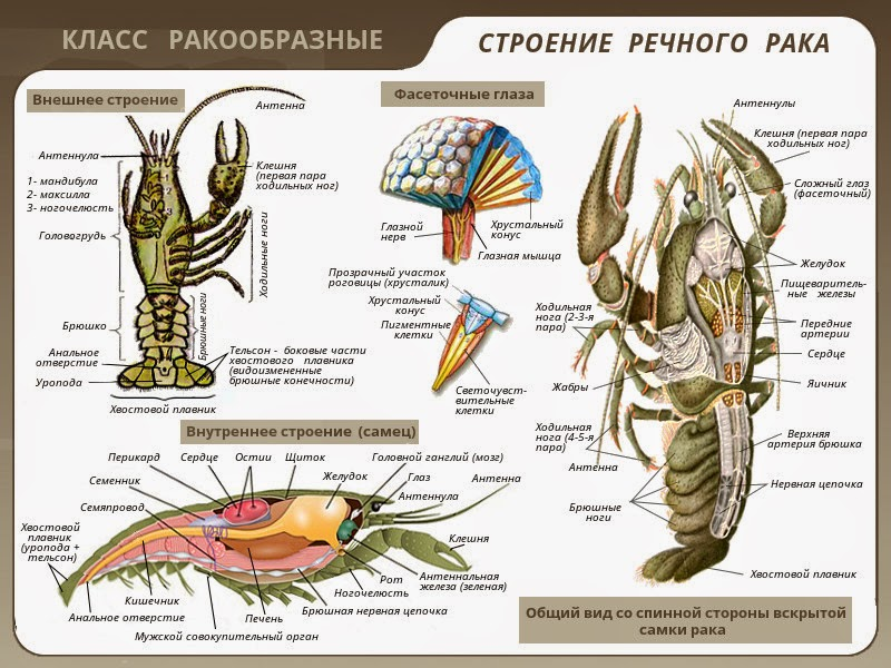 круглые черви Черви - web-zoopark.ru