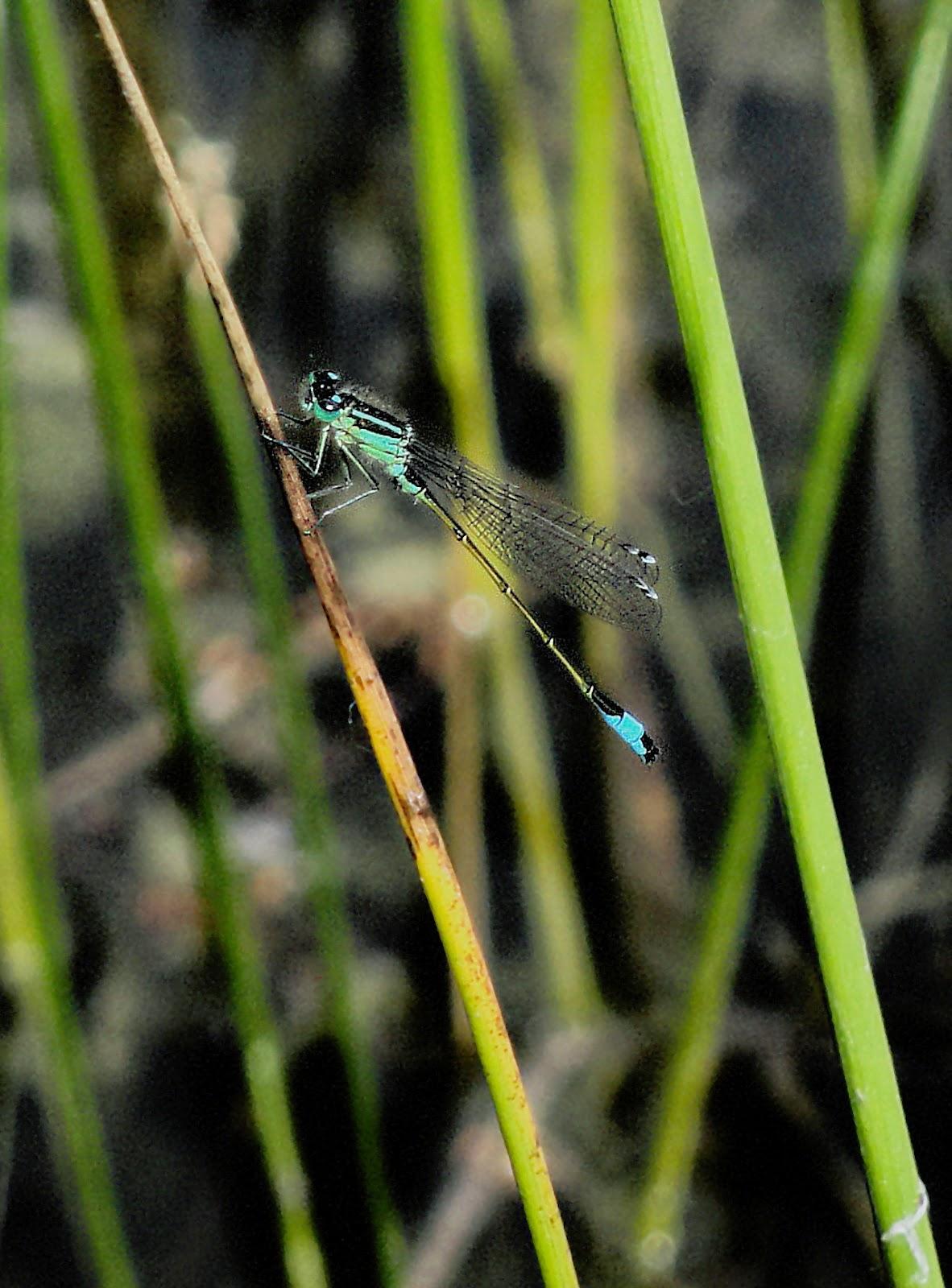 Weert en natuur: libellen