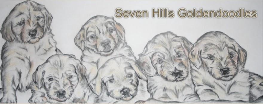 Seven Hills Goldendoodles