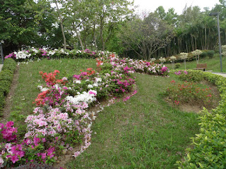 Beautiful Flowers@Lai Chi Kok Park