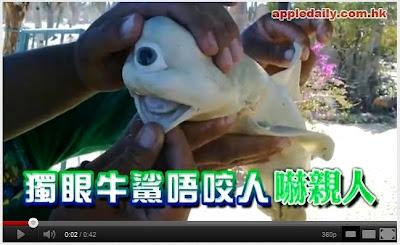 十大怪物 獨眼鯊