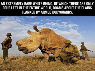 Rhino Has Own Bodyguards