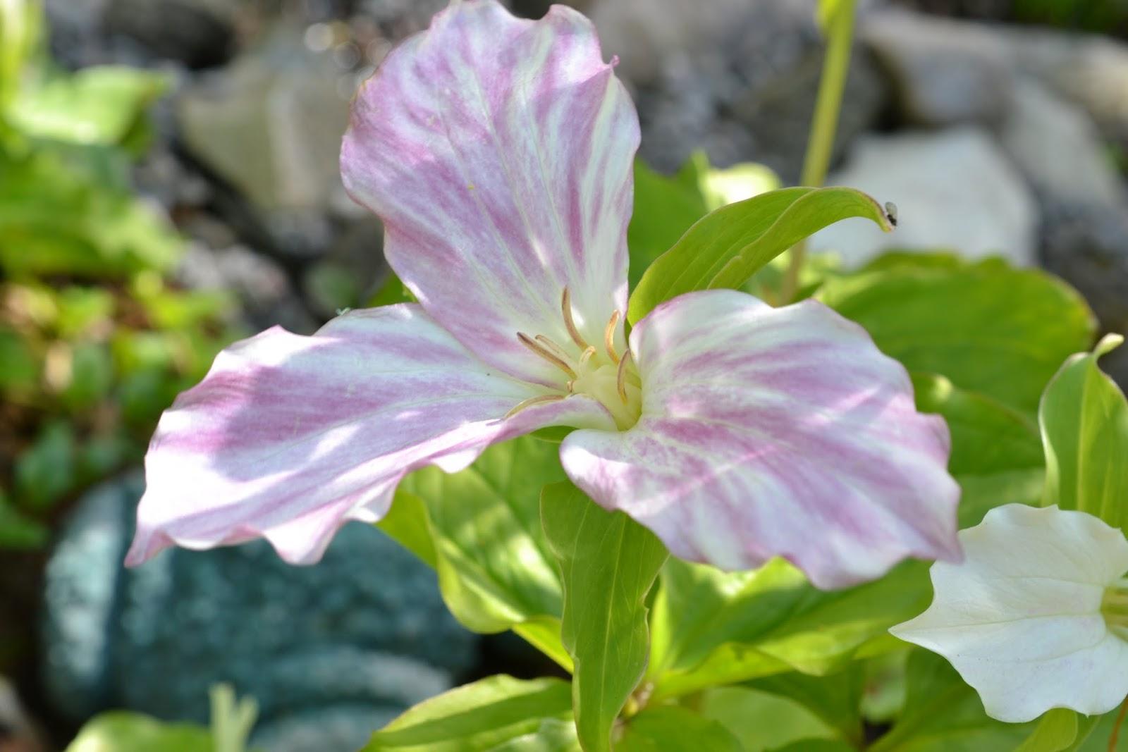 Blomsterbo: trädgårdsbesök