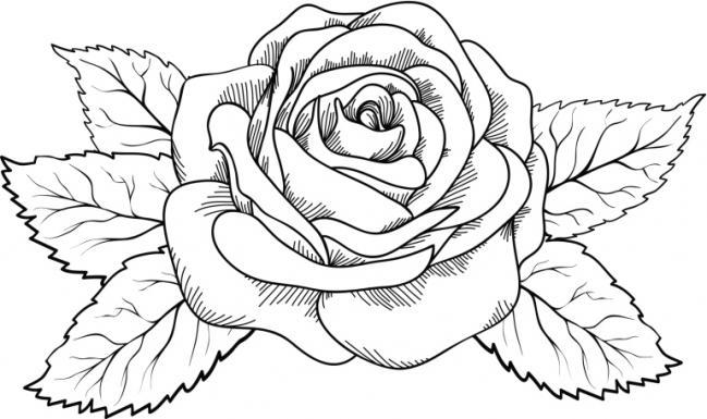 Imagenes de Flores rosas con frases mensajes  animadas para
