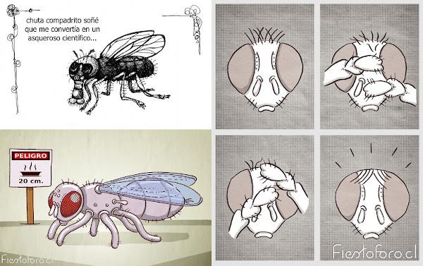 selección de gráficas sobre moscas