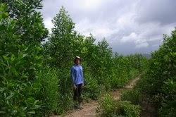 dự án trông rừng của oji paper tại việt nam