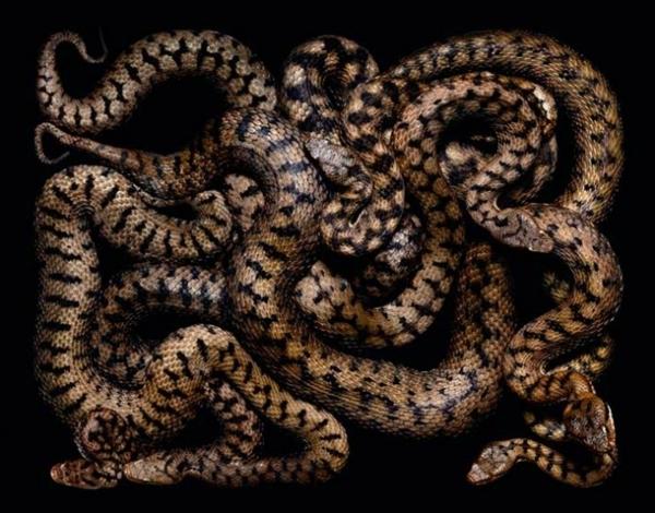 http://3.bp.blogspot.com/-qWMF-XlIUzg/TpbPMGOa35I/AAAAAAAADAE/c2i92C6sSrg/s1600/256704%252Cxcitefun-fascinating-snakes-09.jpg