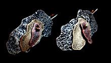 Aros Plata rutilada, Bronce y Cobre, envejecidos (146)