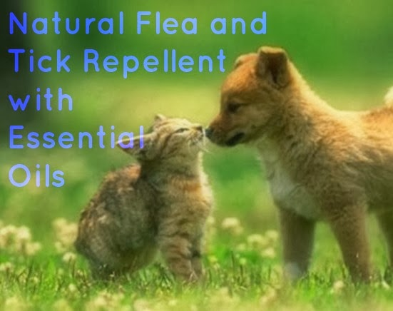 Natural Mama Essential Oils For Flea Tick And Mosquito