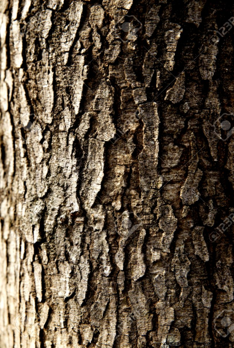 Tree Trunk Closeup Wallpaper Stock Photo Picture And Royalty Free
