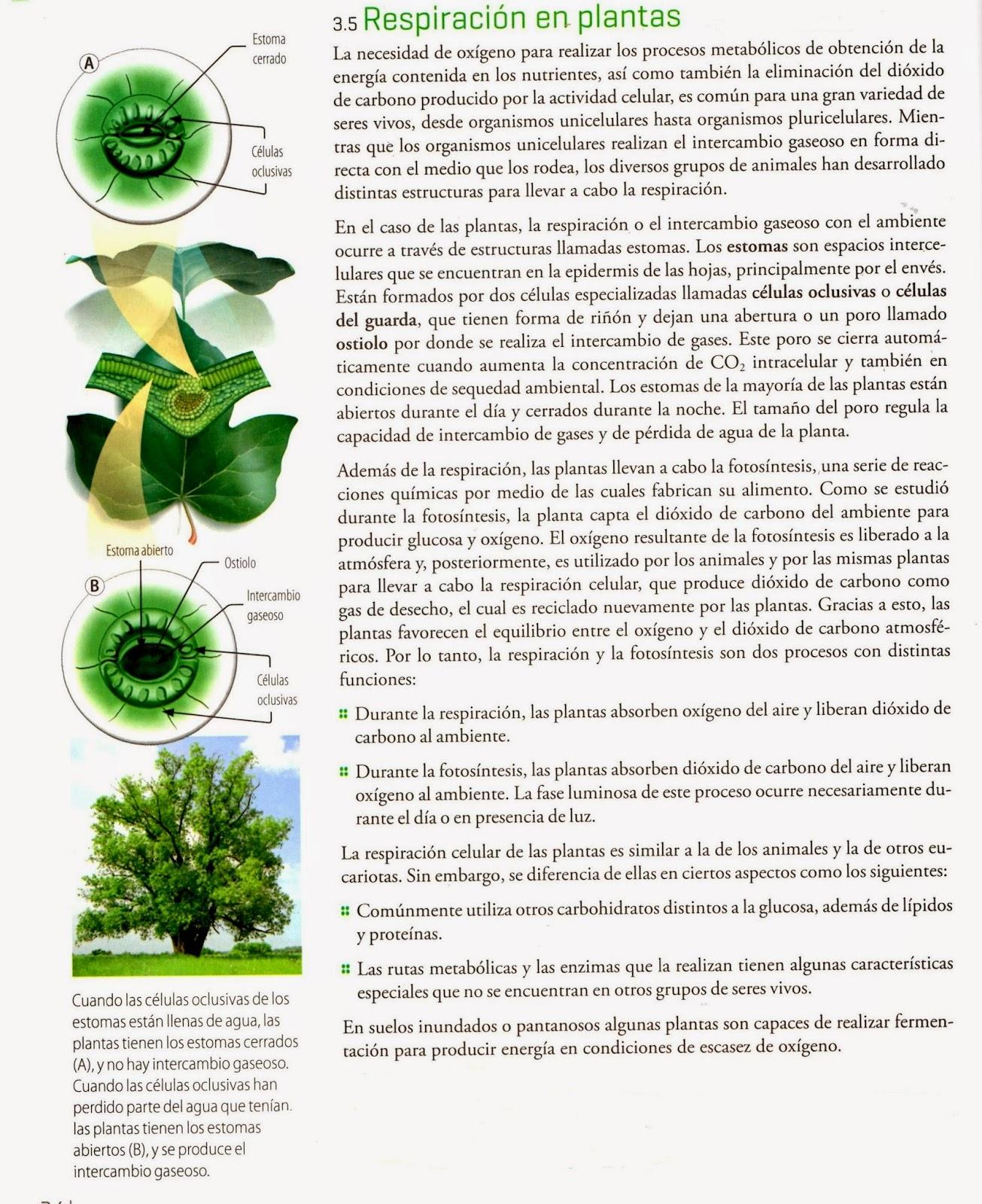 Las tics en las ciencias naturales abril 2014 - Todo sobre las plantas ...
