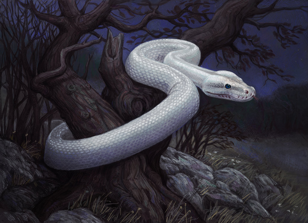 White python snake - photo#11