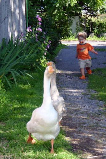 http://3.bp.blogspot.com/-qYKHLupqulE/UbHjLk3_KsI/AAAAAAAAAs8/zmmvn0ubtz4/s1600/wild-goose-chase.jpg