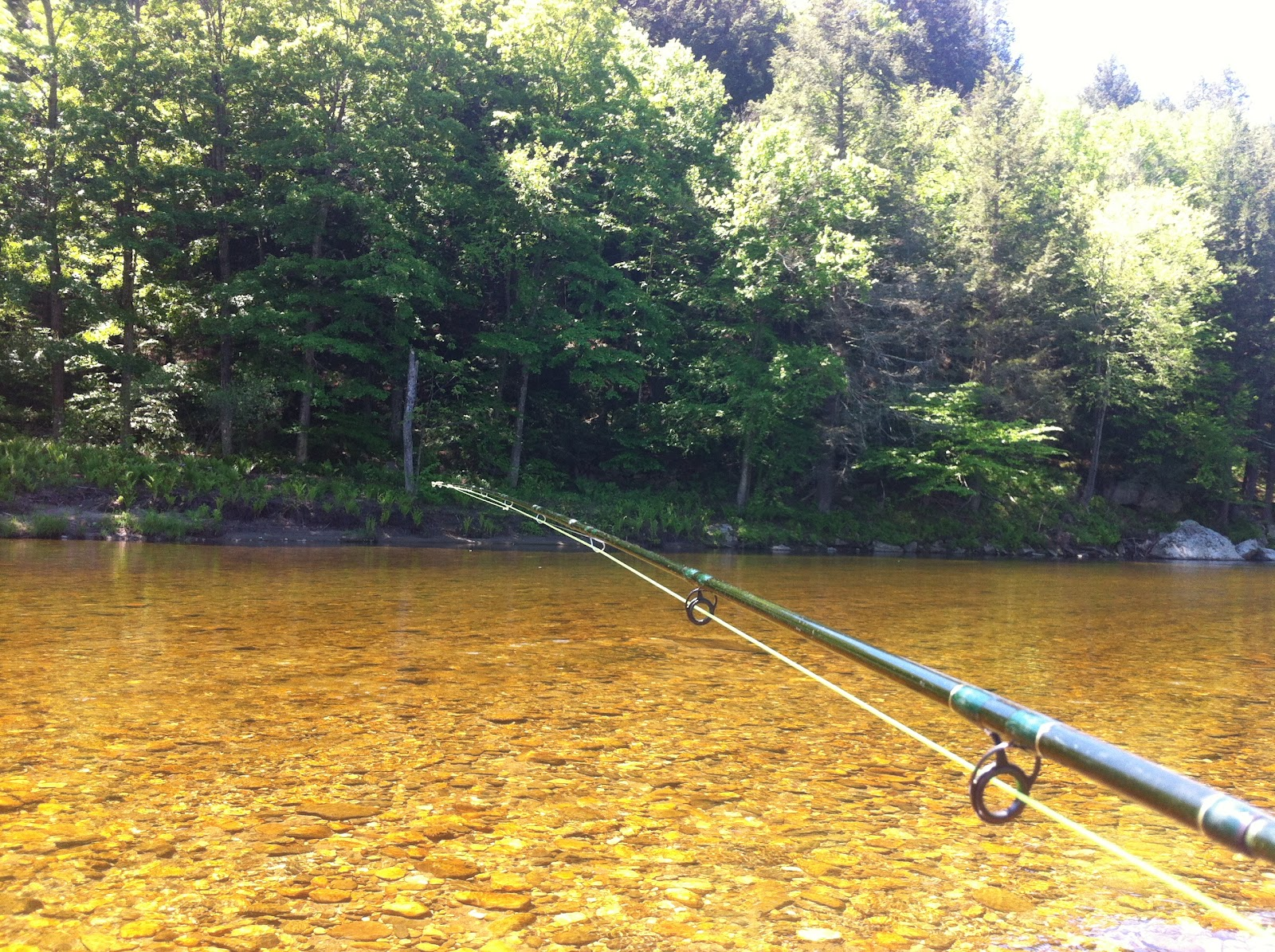 Quinapoxet river fly fishing westfield river indian for River fly fishing