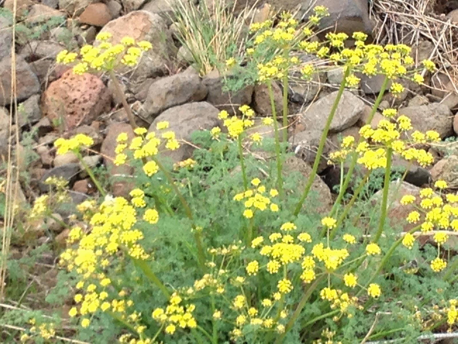 Fagin 39 s weather world hike washington fagin 39 s hike of for Landscaping rocks yakima