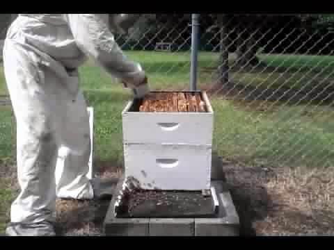 Beekeeping scientists
