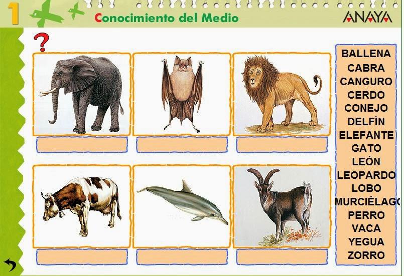 http://centros.edu.xunta.es/ceipcampolongo/intraweb/Recunchos/1/Recursos_Anaya/datos/03_cmedio/03_Recursos/actividades/2losAnimales/act5.htm