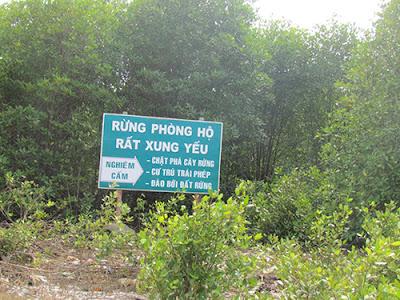 Phía sau biển cấm này khoảng 200 m, rừng phòng hộ bị phá tan hoang