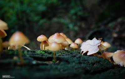 Naszály mushrooms