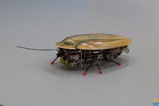 بالفيديو: علماء روس يطورون روبوت على شكل صرصور !