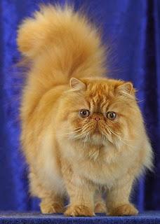 Gato famoso