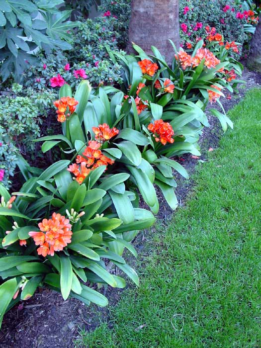 7 kwiat w stycznia 2013 - Plantas de sombra exterior ...