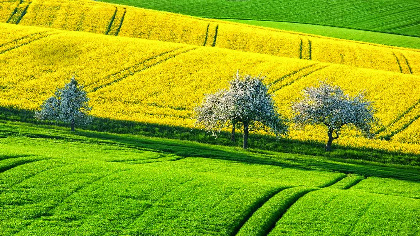 Canola fields in spring, Germany (© Boris Stroujko/Shutterstock) 554