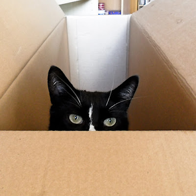 Cat playing peek-a-boo in a box