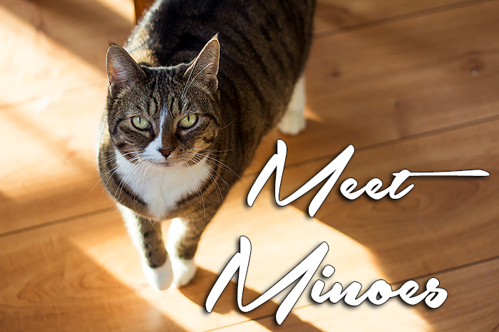 Personal: Meet my cat Minoes