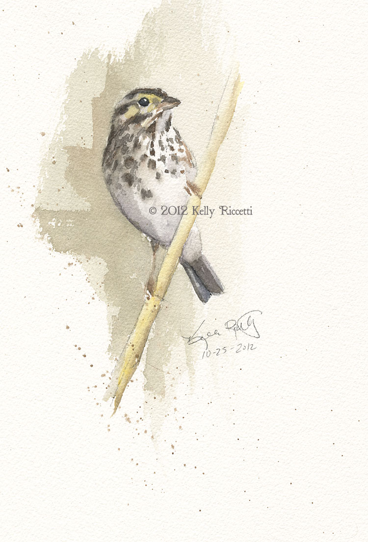 The same Savannah Sparrow in the meadow at Armleder Park in Hamilton county, Ohio (original watercolor by Kelly Riccetti)
