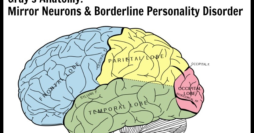 Healing from bpd borderline personality disorder blog for Mirror neurons psychology definition