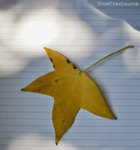 fallen yellow leaf with shadows and light