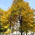 L'autunno in Torino