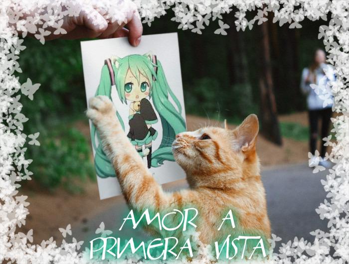 Sé que este gato encontrará a su gran amor