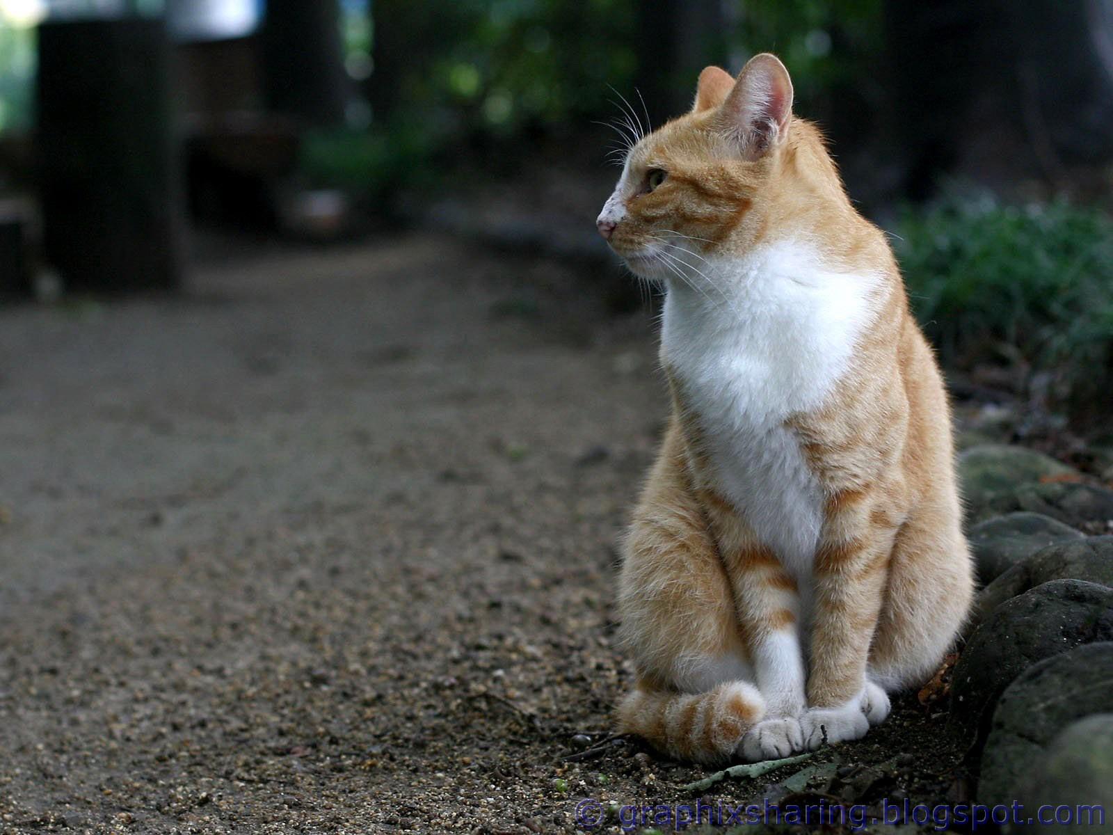 http://3.bp.blogspot.com/-qbCCe1oPSdA/TpmnG6wLDKI/AAAAAAAAAMI/db7ioSivwhU/s1600/Funny+Cats+Wallpapers+%252819%2529.jpg