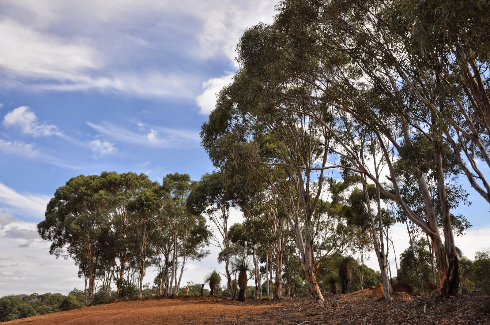 Australian Bush, Toodyay, Western Australia
