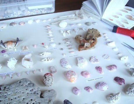 organizing shells scientifically