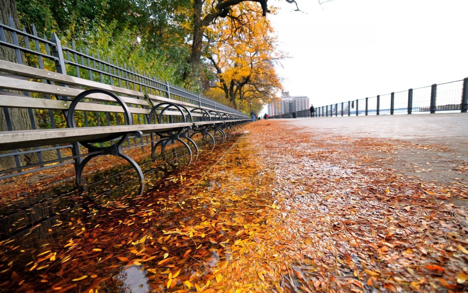 City Park Leaves Fall Bench Wallpapers