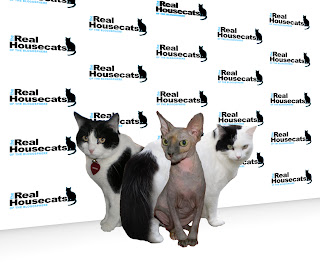 The Real Housecats