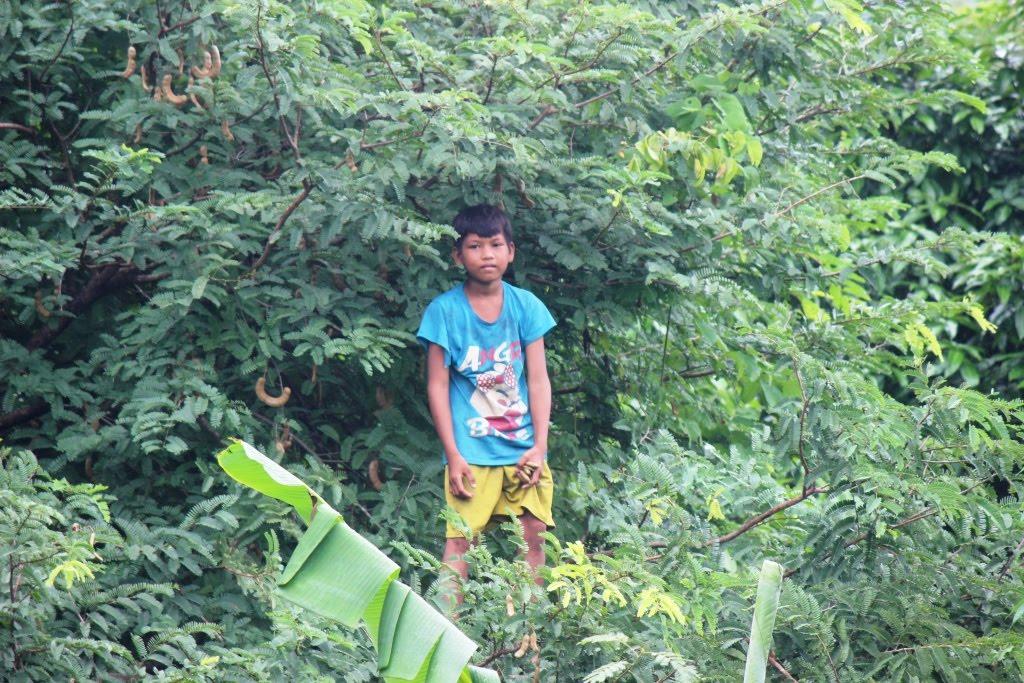 children do grow on trees