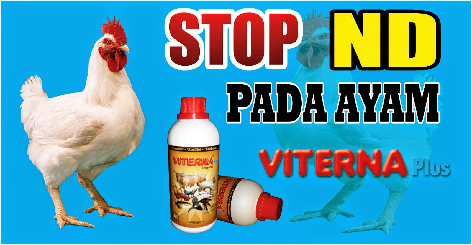 Keunggulan Viterna mencegah penyakit ND pada ayam