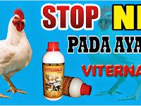 Peran Viterna Mencegah Gangguan Pernafasan Pada Ayam