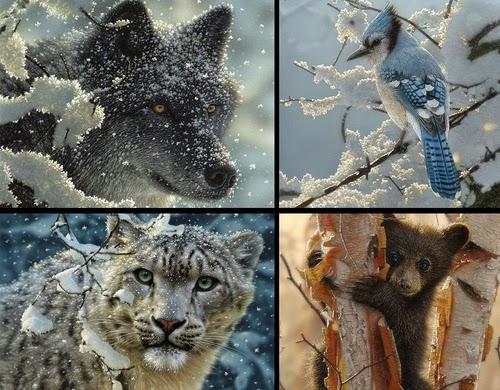 00-Collin-Bogle-Animal-Wildlife-in-Art-www-designstack-co