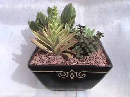 Centros de mesa arreglos cactus y suculentas for Curso cactus y suculentas