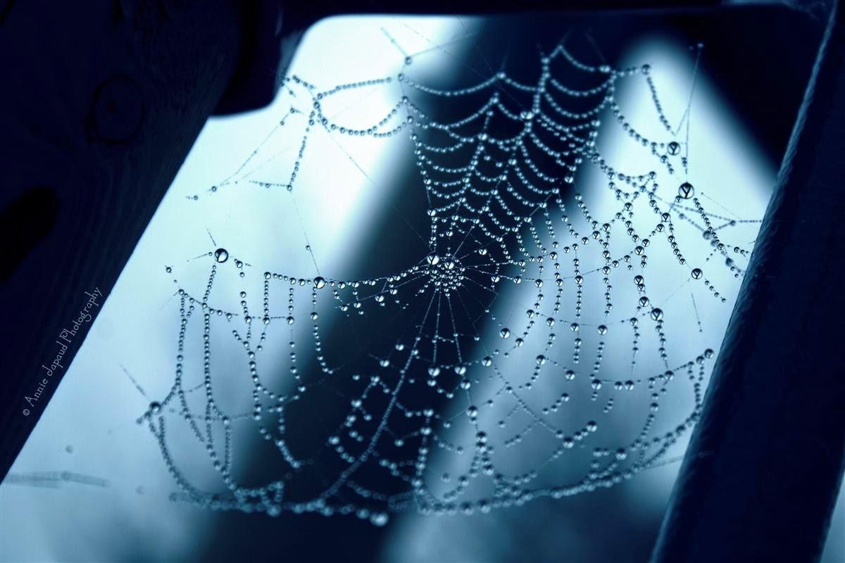 large cobweb