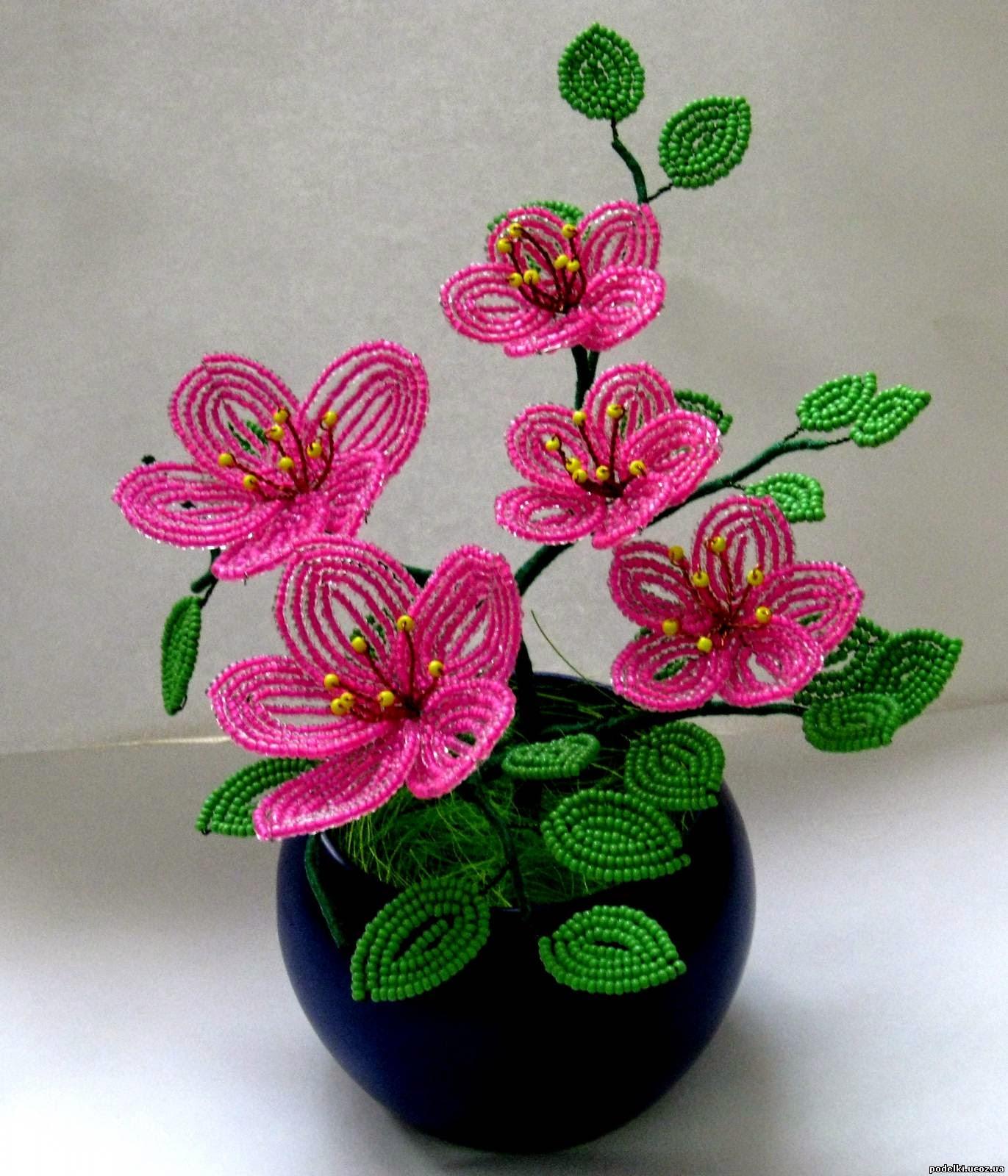 гвоздика цветок для сада