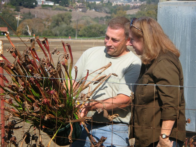 Don Elkins of Mesa Exotics shows off a pitcher plant to Leslie Harris