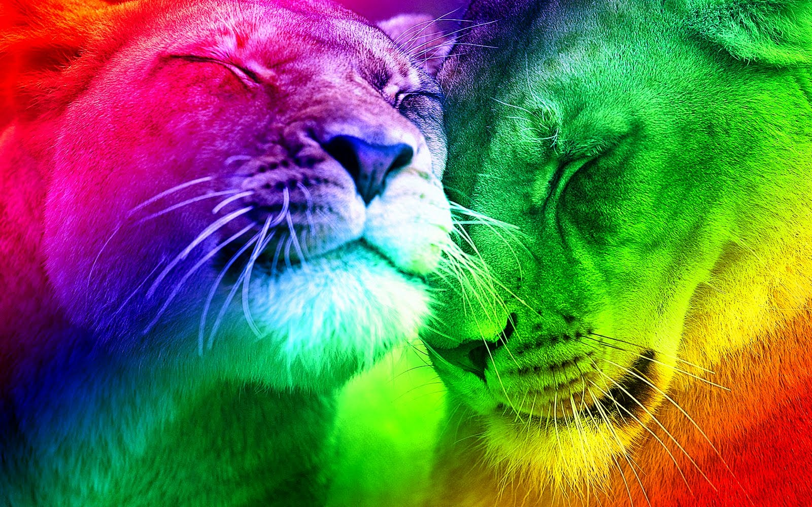 "Woman: ""A Gay Pride is a bunch of gay lions."" You often hear that kind of ..."