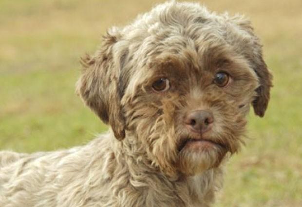 Cão com 'face humana' faz sucesso na internet.