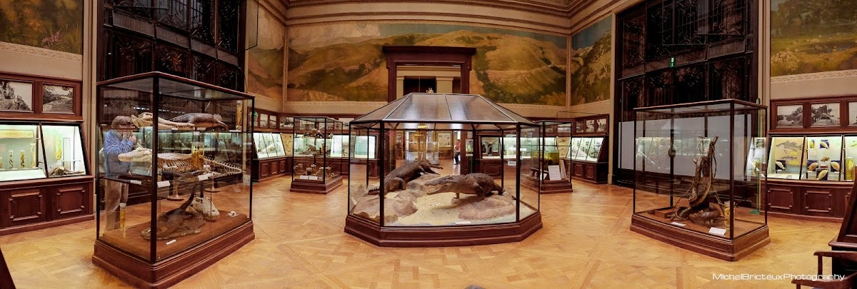Musée Royal d'Afrique Centrale, Tervuren (Brussels)